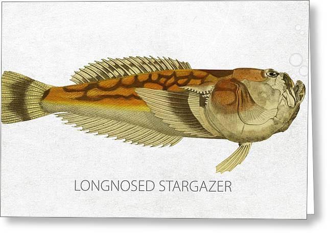 Longnosed Stargazer Greeting Card by Aged Pixel