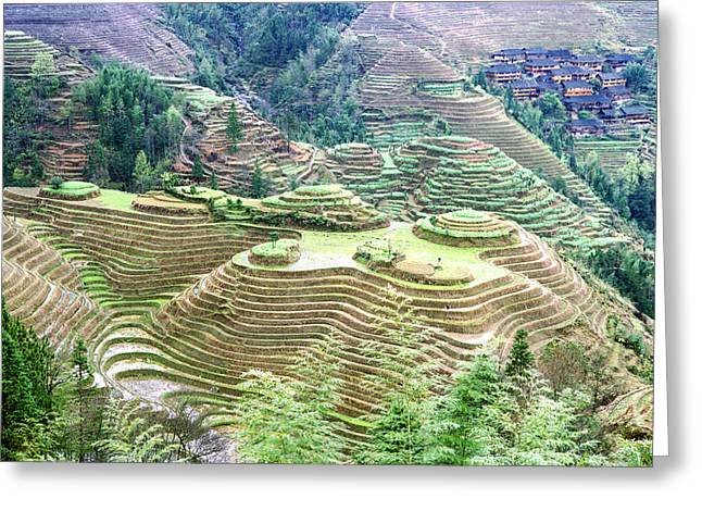 Rice Paddy Greeting Cards - Longsheng Rice terraces China Greeting Card by King Wu
