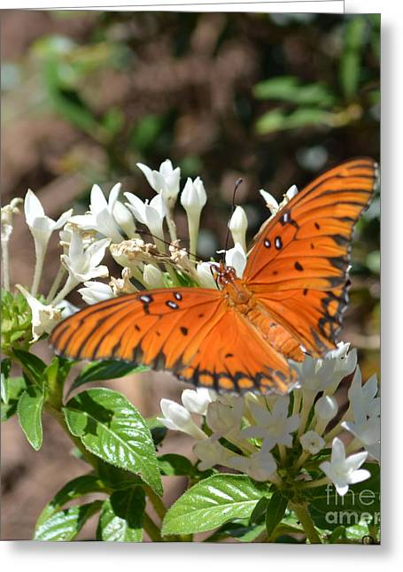Ruth Housley Greeting Cards - Longwing Butterfly  Greeting Card by Ruth  Housley
