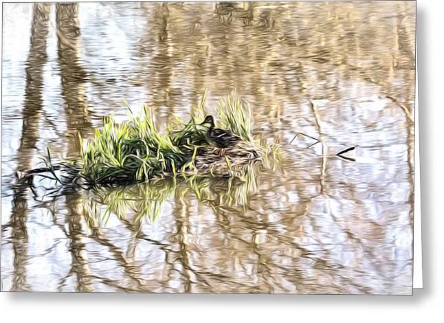 Lonly Greeting Cards - lonly island IMP - Female mallard duck on a floating island Greeting Card by Leif Sohlman
