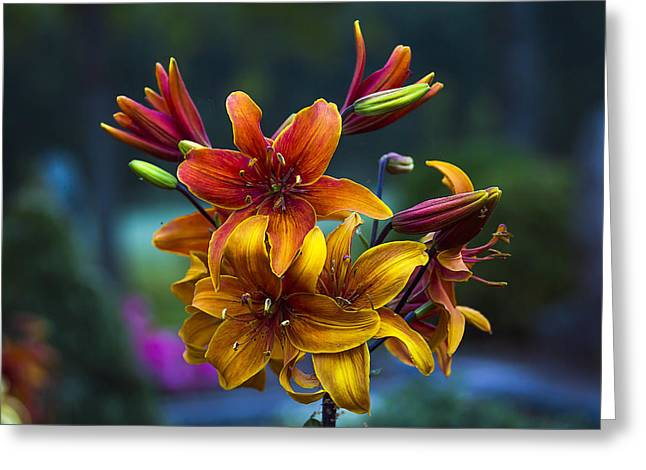 Flower Design Greeting Cards - Look at me Greeting Card by Algirdas Gelazius