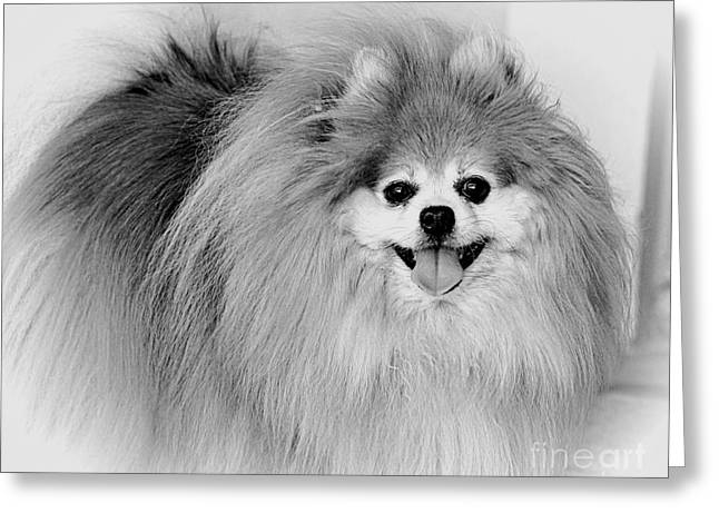 Watchdog Greeting Cards - Look at me BW Greeting Card by TN Fairey