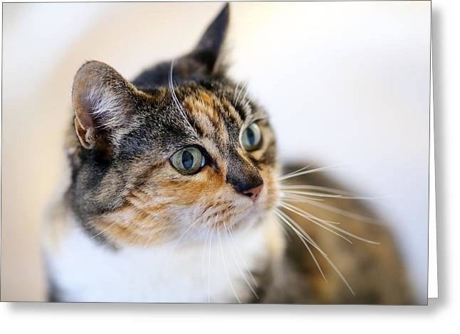 Cats Eye Greeting Cards - Look at those Eyes Greeting Card by Rebecca Cozart