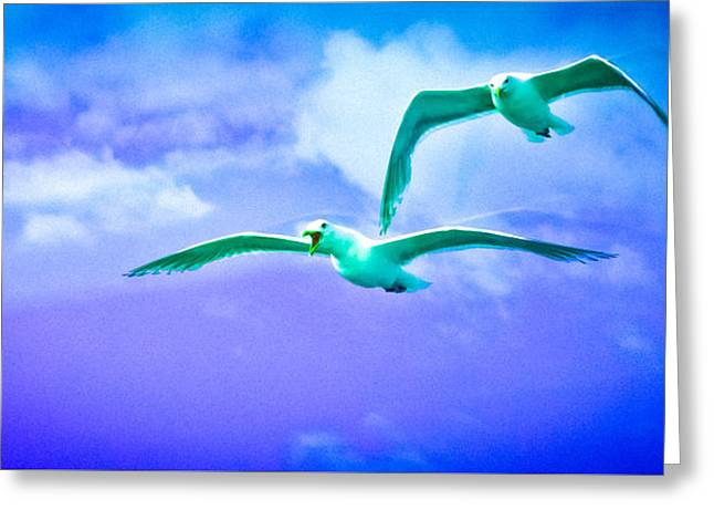 Recently Sold -  - Seabirds Greeting Cards - Look Dear its the Seahawks Greeting Card by Ronda Broatch
