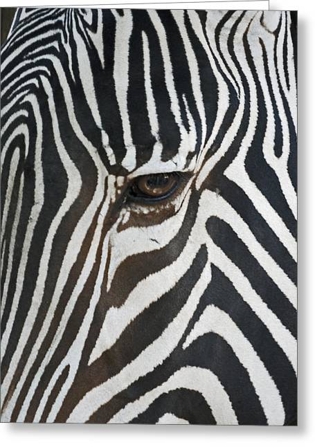 Zebra Face Greeting Cards - Look into my eye Greeting Card by Ernie Echols