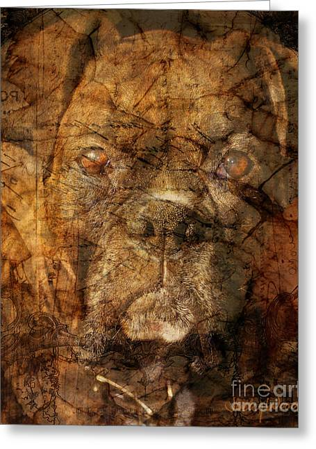 Recently Sold -  - Boxer Digital Art Greeting Cards - Look into my Eyes Greeting Card by Judy Wood