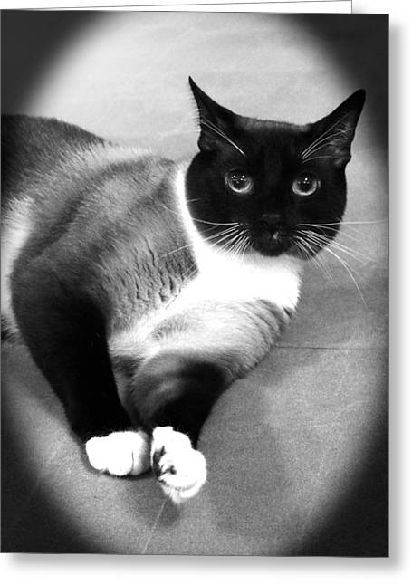 Siamese Cat Greeting Card Greeting Cards - Look Into My Eyes Greeting Card by Lorna Rogers Photography