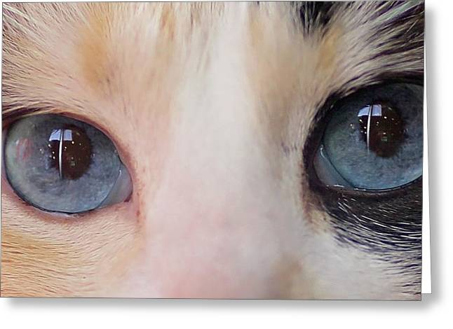 Cat Eyes Greeting Cards - Look Into My Eyes Greeting Card by Rebecca Cozart