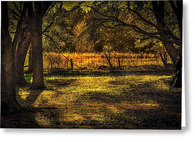 Fence Line Greeting Cards - Look into the Golden Light Greeting Card by Marvin Spates