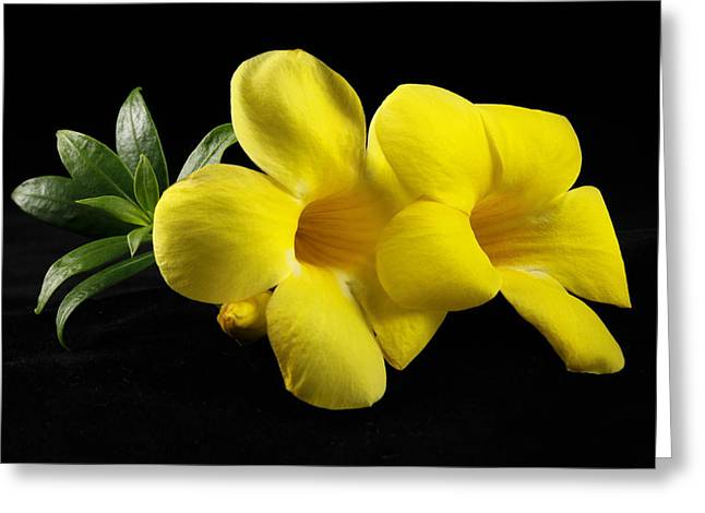 Yellow Flowers Framed Prints Greeting Cards - Look Over There Greeting Card by Jon Glaser