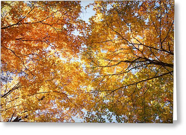 Boone County Greeting Cards - Look Up Greeting Card by Cricket Hackmann