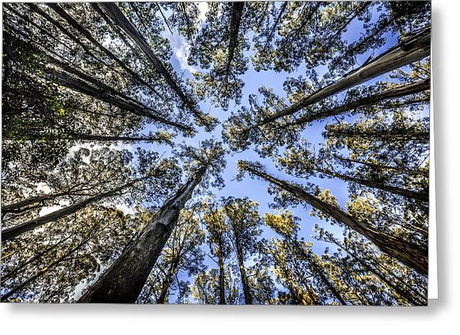 Look Up Greeting Card by Shari Mattox
