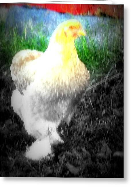 Sun Breakthrough Greeting Cards - Lookin For My Egg Greeting Card by Hilde Widerberg