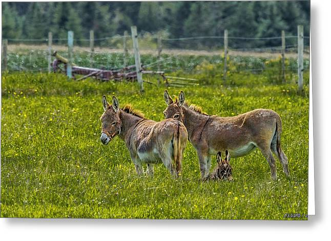 Annapolis Valley Greeting Cards - Looking After Junior Greeting Card by Ken Morris