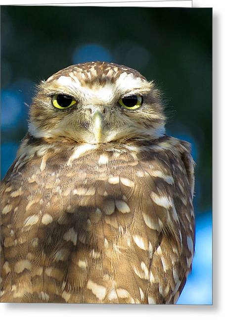 Wildlife Genre Greeting Cards - Looking at You Greeting Card by Ed  Cheremet