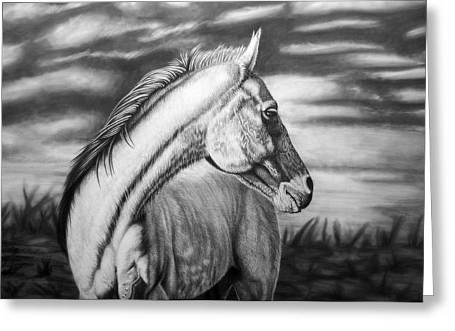 Horse Drawings Greeting Cards - Looking Back Greeting Card by Glen Powell