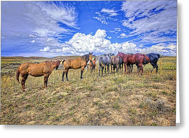 Steamboat Greeting Cards - Looking Back Greeting Card by James Steele