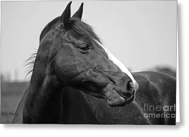 Caballo. Fence Greeting Cards - Looking BW Greeting Card by J M Lister
