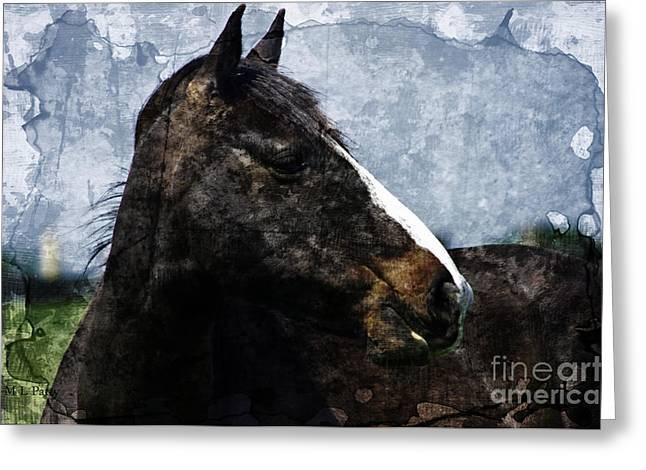 Caballo. Fence Greeting Cards - Looking - Digitally Textured Greeting Card by J M Lister