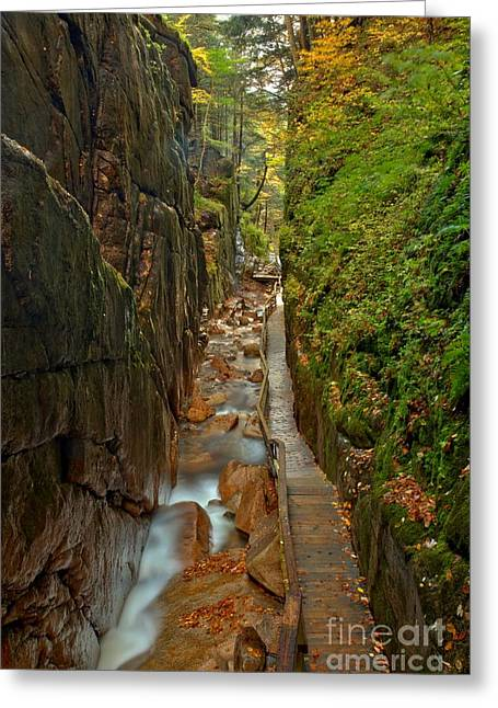 Lush Green Greeting Cards - Looking Down Flume Gorge Greeting Card by Adam Jewell