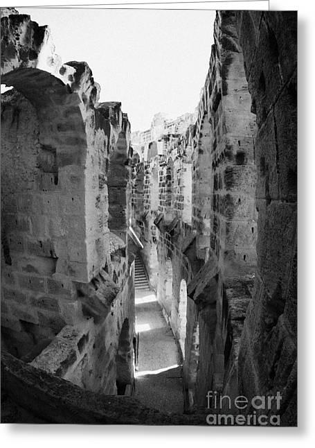 African Heritage Greeting Cards - Looking Down On Internal Walkways From Upper Tier Of Old Roman Colloseum El Jem Tunisia Vertical Greeting Card by Joe Fox