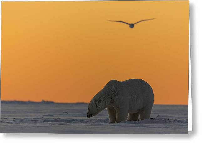 Wildlife Refuge. Greeting Cards - Looking for an Evening Meal Greeting Card by Tim Grams