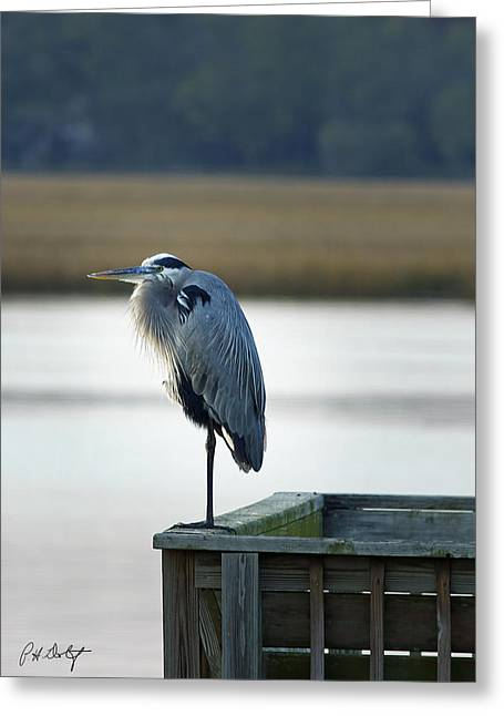 Beaufort Greeting Cards - Looking For Dinner Greeting Card by Phill  Doherty