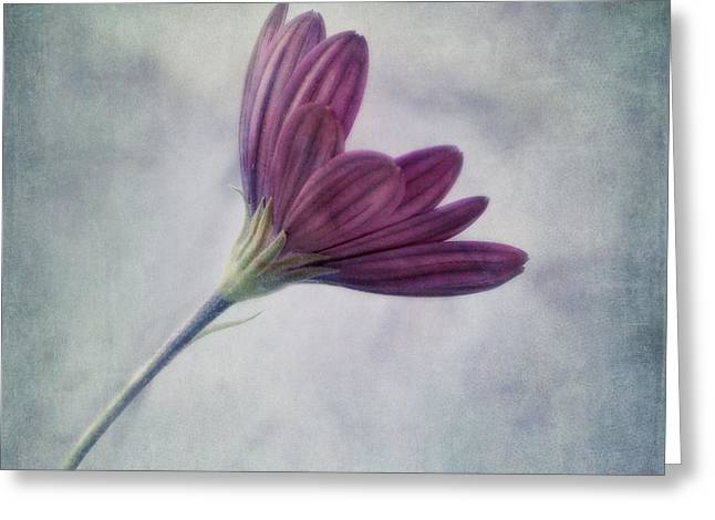 Floral Art Greeting Cards - Looking For You Greeting Card by Priska Wettstein