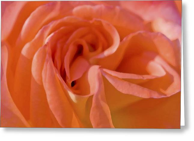 Rose Petals Greeting Cards - Looking Good Rose Greeting Card by Rich Franco