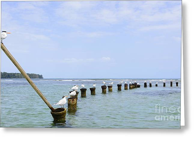 Landscape Photographs Greeting Cards - Looking Out at the Sea Greeting Card by Oscar Gutierrez