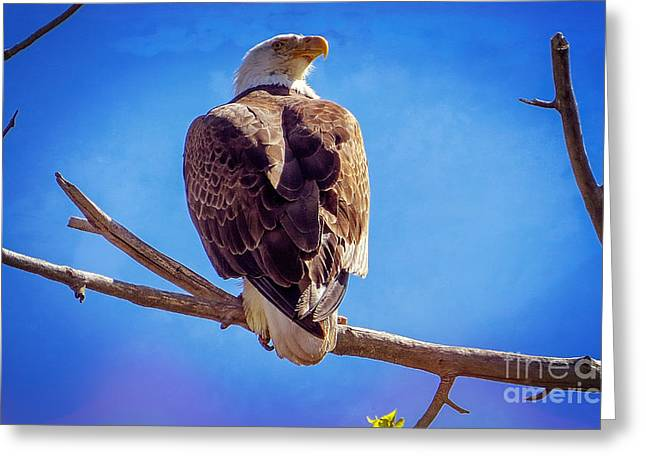 Conservative Greeting Cards - Looking Right Greeting Card by Bob Hislop