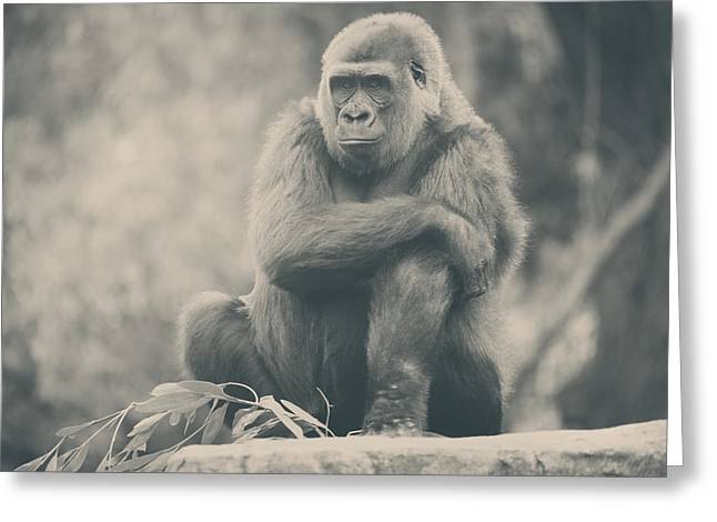 Looking So Sad Greeting Card by Laurie Search