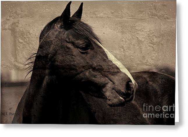Caballo. Fence Greeting Cards - Looking - textured sepia Greeting Card by J M Lister