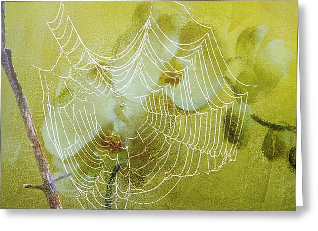 Spider Digital Art Greeting Cards - Looking Through The Web Flower Greeting Card by J Larry Walker