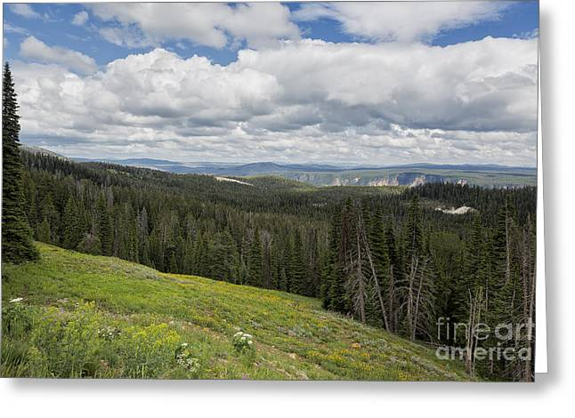 Famous Photographer Greeting Cards - Looking to the Canyon - Yellowstone Greeting Card by Belinda Greb