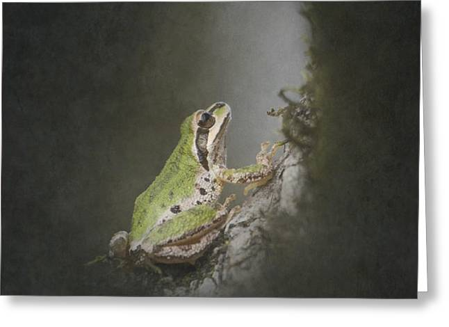 Looking Up Greeting Card by Angie Vogel