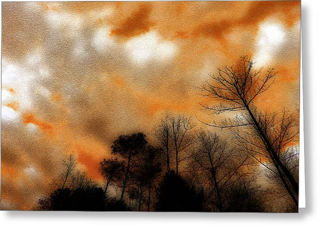 Bare Trees Greeting Cards - Looking Up Greeting Card by Michael Eingle