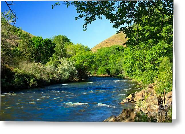 Fishing Creek Greeting Cards - Looking Up Pine Creek Greeting Card by Robert Bales