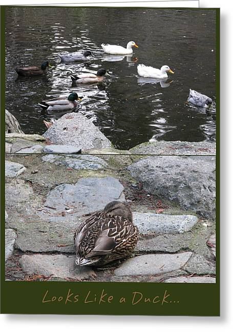 Pond In Park Greeting Cards - Looks Like a Duck Greeting Card by Brooks Garten Hauschild