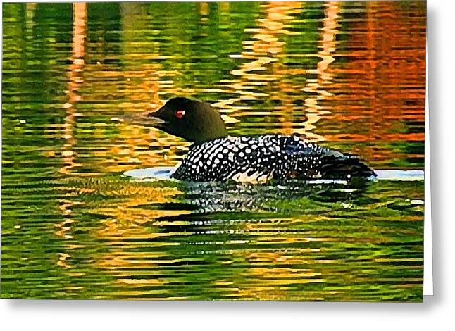 Loon 3 Greeting Card by Pat Now