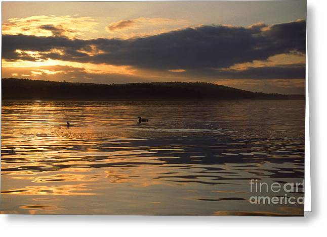 Photos Of Birds Greeting Cards - Loon Lake Greeting Card by Skip Willits