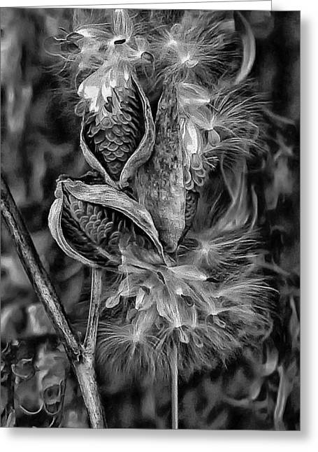 Milkweed Greeting Cards - Lord of the Dance 2 monochrome Greeting Card by Steve Harrington