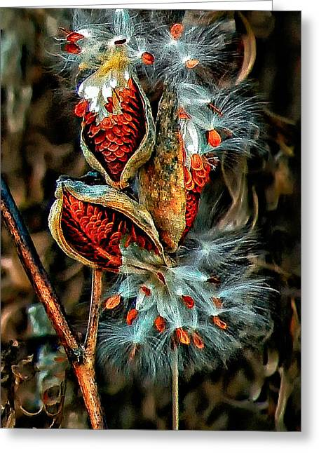 Milkweed Greeting Cards - Lord of the Dance 2 Greeting Card by Steve Harrington