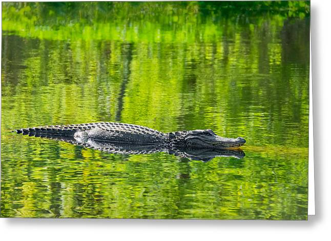 Alligator Bayou Greeting Cards - Lord of the Green Greeting Card by Steve Harrington