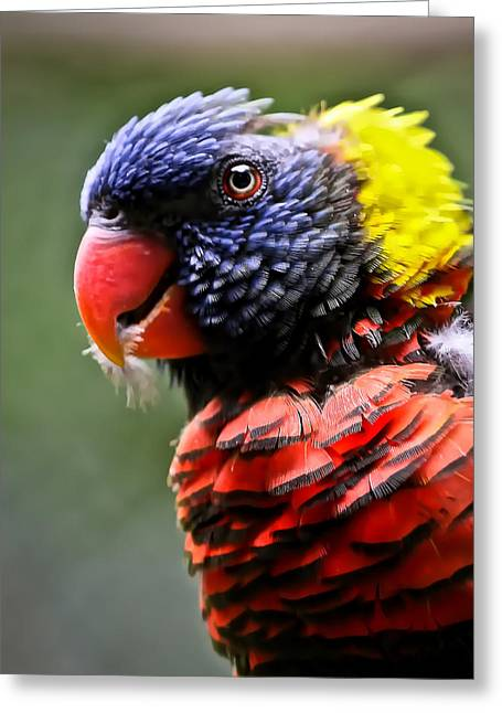 Lorikeet Bird Greeting Card by Athena Mckinzie
