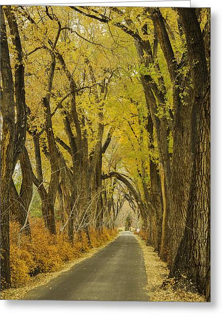 Herfst Greeting Cards - Los Poblanos Ranch Drive-001 Greeting Card by David Allen Pierson