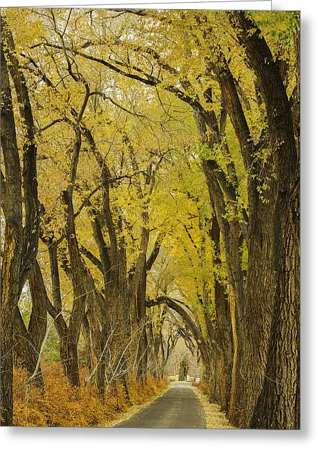Herfst Greeting Cards - Los Poblanos Ranch Drive-002 Greeting Card by David Allen Pierson