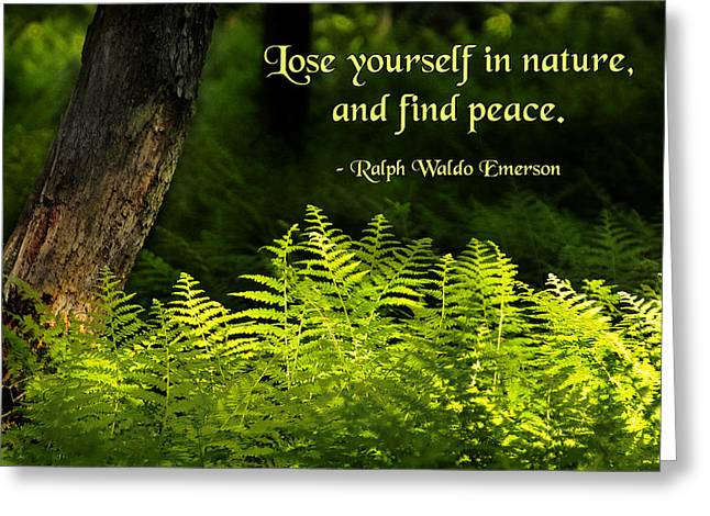 Lose Yourself In Nature Greeting Card by Mike Flynn
