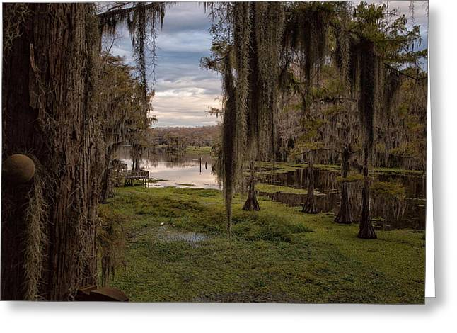 """caddo Lake"" Greeting Cards - Lost Dog Walk Greeting Card by John Hesley"