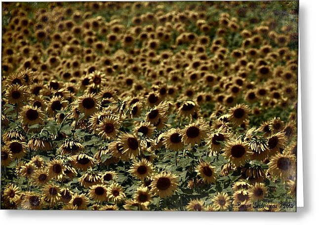 Sunflower Patch Greeting Cards - Lost in a Sunflower Patch Greeting Card by Brian  Seidenfrau